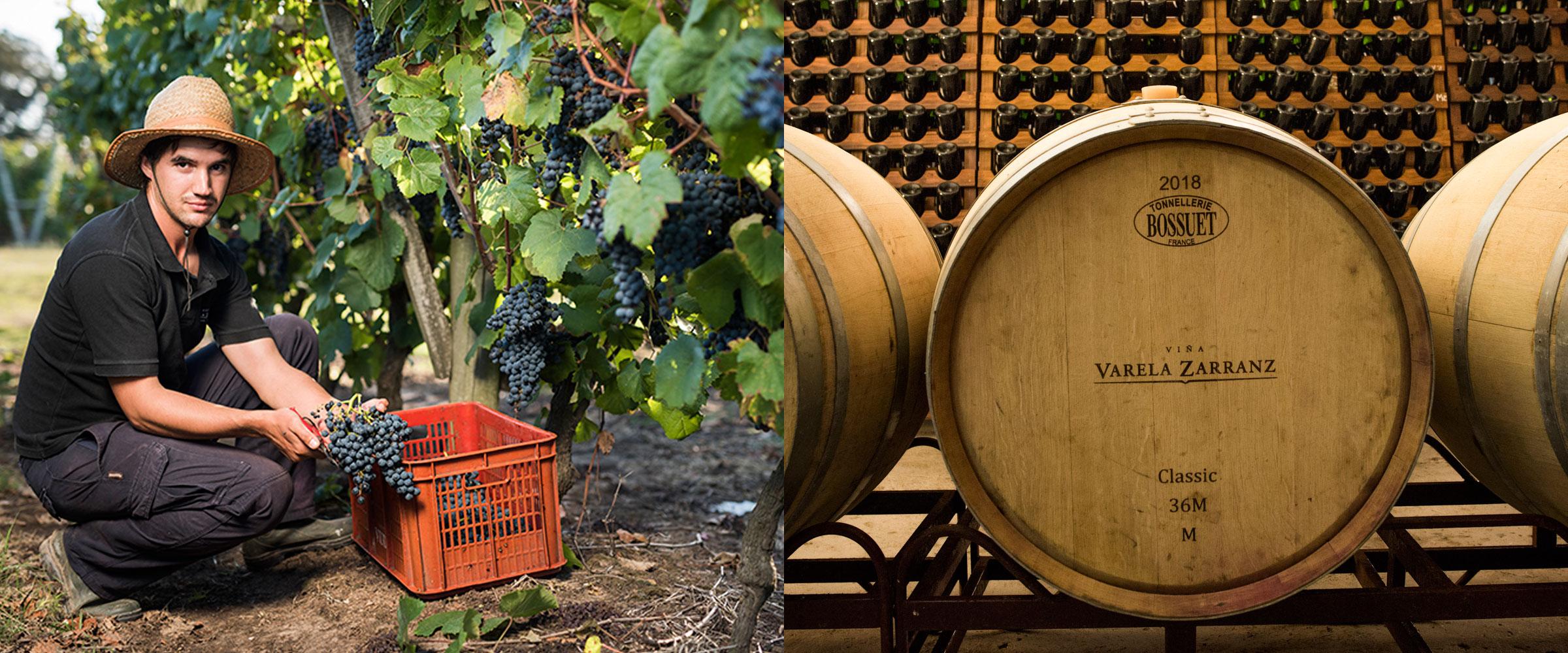 Viña Varela Zarranz - Conozca nuestros vinos