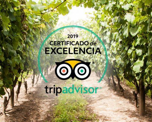¡Obtuvimos el Certificado de Excelencia 2019 de TripAdvisor!